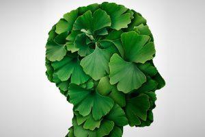 lá bạch quả tác dụng bổ não